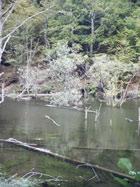 Judetul Alba-Lacul Oasa pe raul Sebes