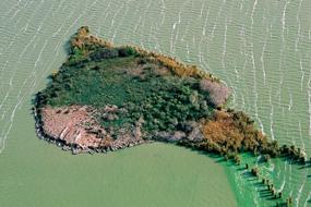 asezare neolitica lacul tasaul