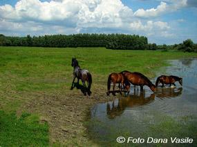cai in delta dunarii