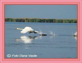 lebada in delta dunarii