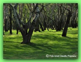 natura vie - ecologie - padure