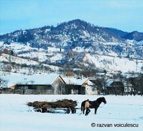 sat bucovinean iarna