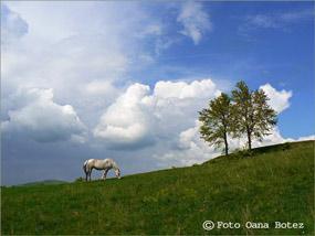 stapanul norilor