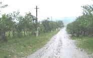 Barna in ploaie