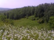 Peisaj
