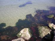 Marea -zona digului