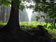 Rezervatia Naturala Glodeasa